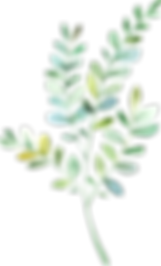 MajesticGreen-floralelements-042.png