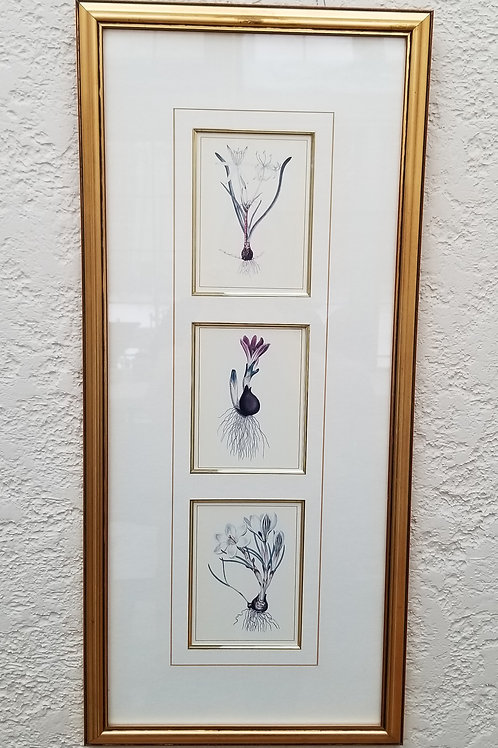 Lot 81 Botanical Prints