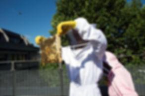 SOAS Bees-51.JPEG