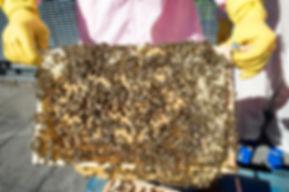 SOAS Bees-69.JPEG