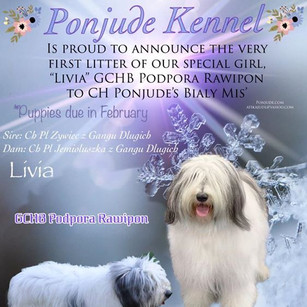 So excited about our news.....__AKC Cham