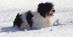 Nora in Feb snow