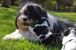 Trinka with pup