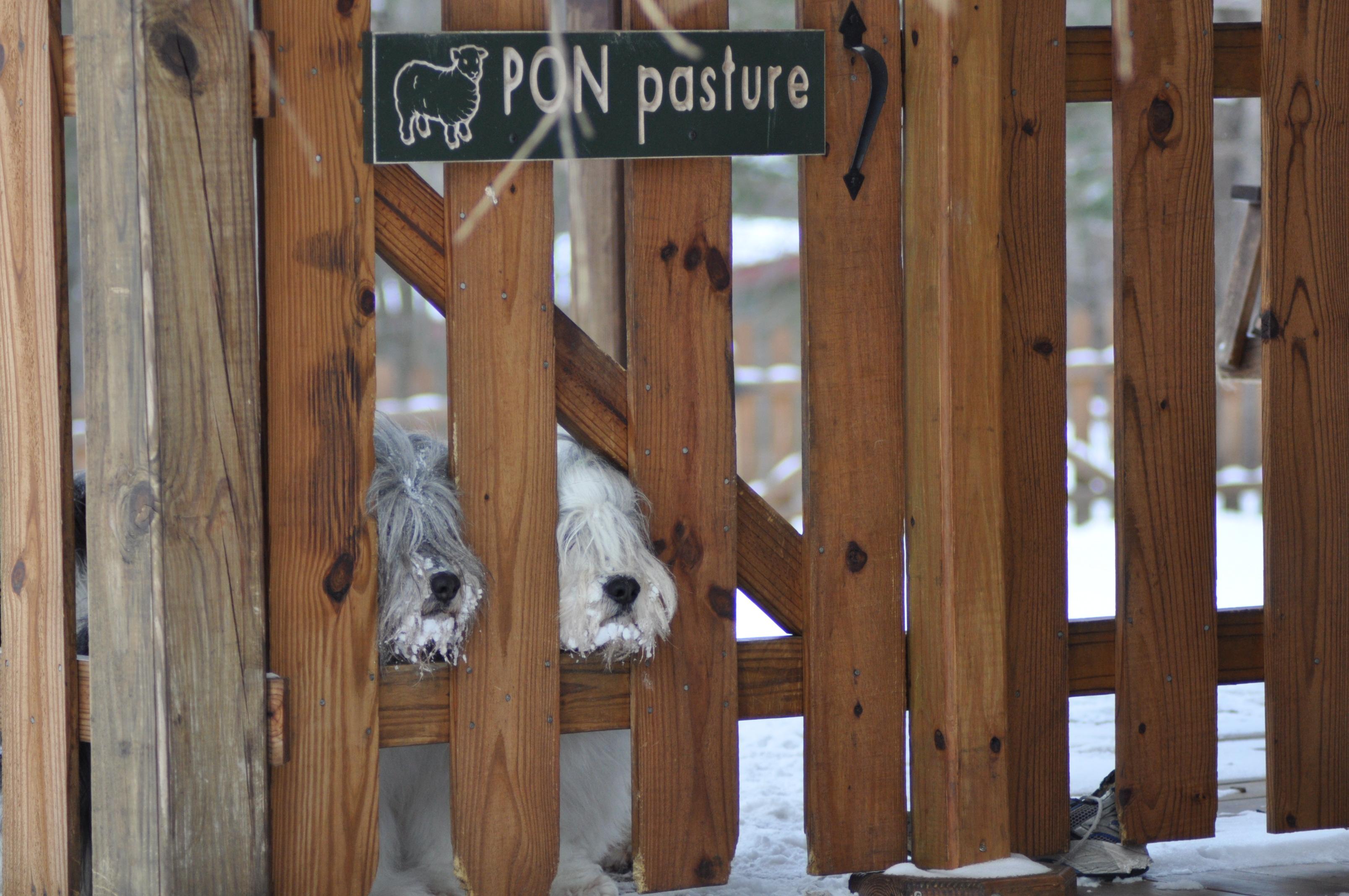 Pon Pasture