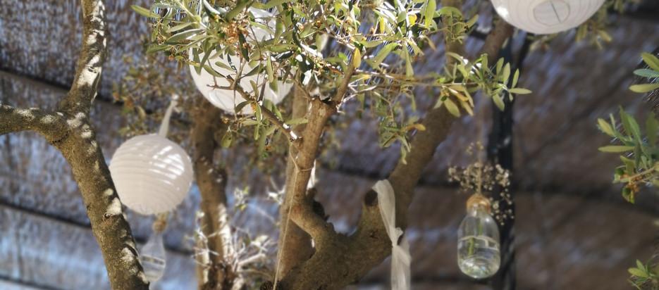 Habiller les arbres- Décoratrice ecoresponsable- marseille Verrerie