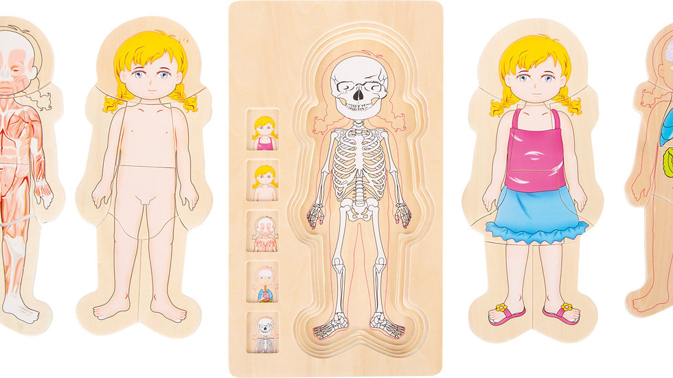 Schichtenpuzzle Anatomie Mädchen