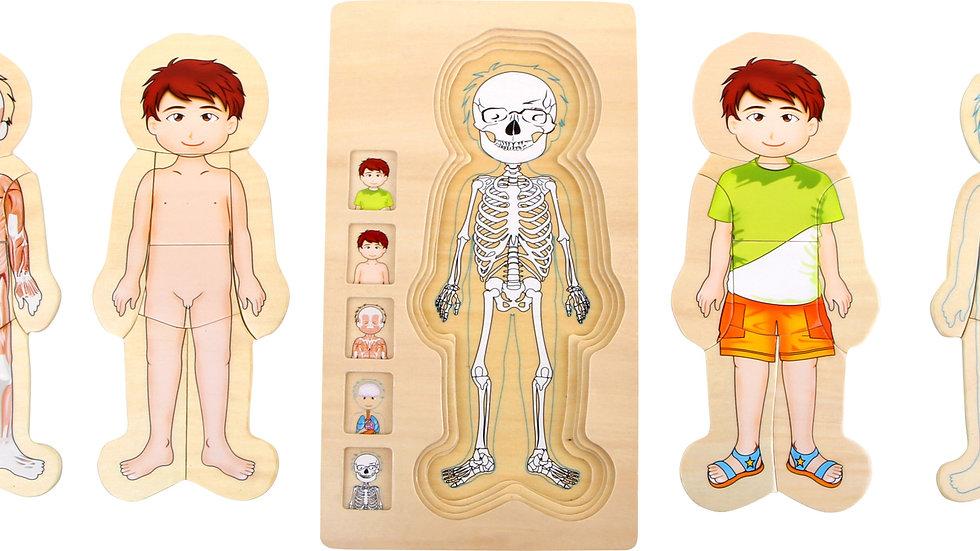 Schichtenpuzzle Anatomie Junge