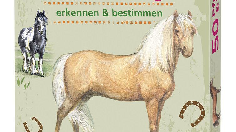 50 Ponys und Pferde