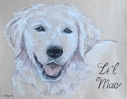 Dog Portrait Drawing