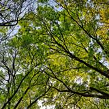 Kendra Forêt 13.jpg