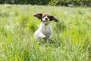 Pet Location Shoot 03.jpg