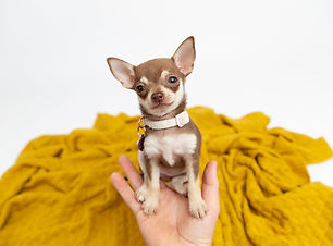 Pet Studio Photography 02.jpg