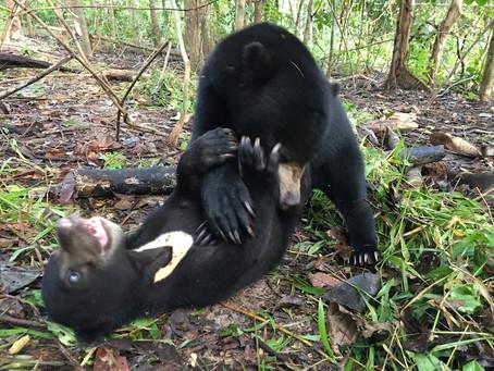 Des nouvelles de Aider les Ours
