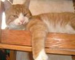 le blog de chat pitre