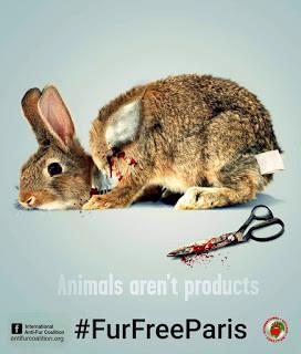 Lettre à Mme Anne Hidalgo pour une interdiction des ventes de fourrures animales à Paris