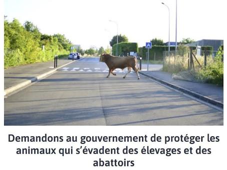 Paris Luttes Animales, hommage à Ferdinand, 23/07/2021
