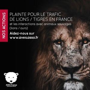 Caresse de tigre, Tiger King à la française. Au coeur du business des faux sanctuaires pour animaux