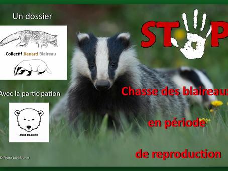 La chasse du blaireau Européen (Meles meles) en France, une singularité en incohérence avec la bio