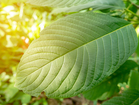 Tips When Buying Kratom during the Coronavirus Outbreak