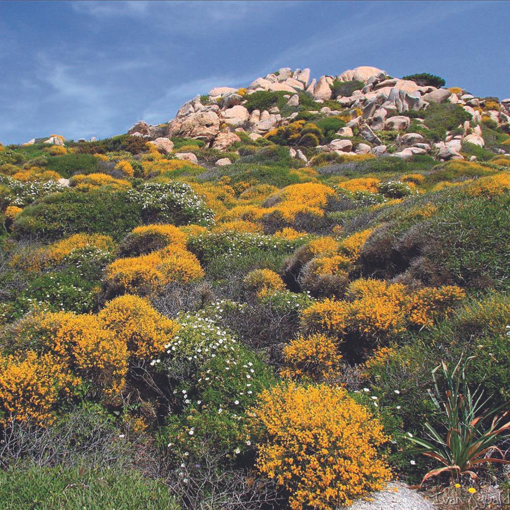 Shrubland typology of vegetation
