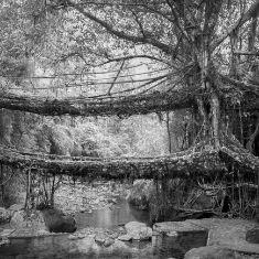 Craft of living bridges
