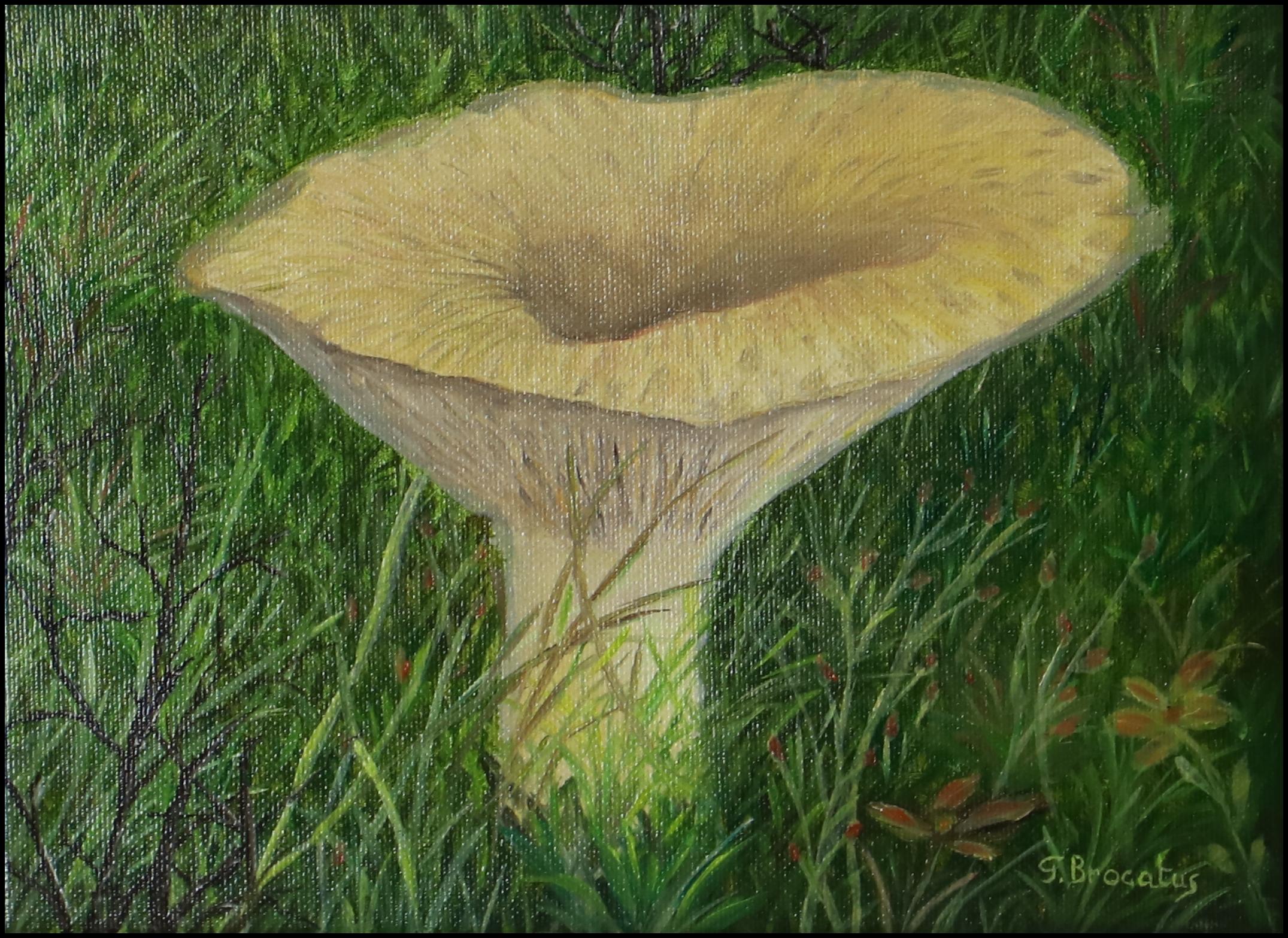 Bearded milk mushroom