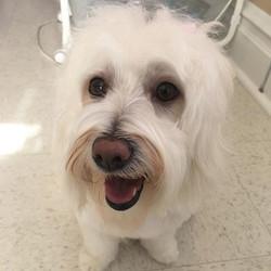 #chloe #browniesdoggiesalon #petsagram #petstagram #petgroomer