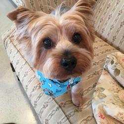 #brownies_doggie_salon #coby #petgroomer #petservice #wescosville
