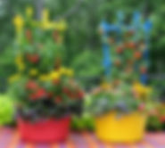 container pepper garden.jpg