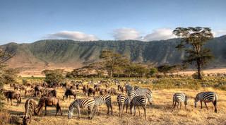 ngorongoro-crater-tanzania-animals-lead-