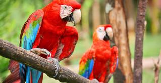 Lapas Costa Rica (1).jpg