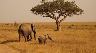 serengeti-ngorongoro-tarangire18-1500x10