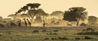 Wildlife-in-Kenya-1536x1017.jpeg