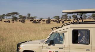 Cruiser+and+buffalo.jpg