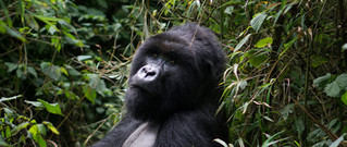 rwanda-featured.jpg
