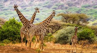 ngorongoro-safari-tanzania-1500x1000.jpg