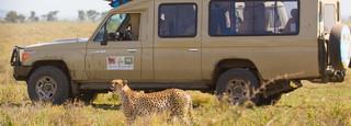 cruiser+with+cheetah.jpg