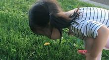 Outdoor Flower