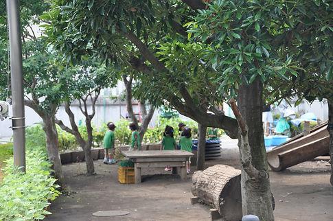 幼稚園写真7.JPG