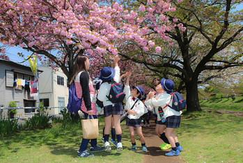 桜にふれる