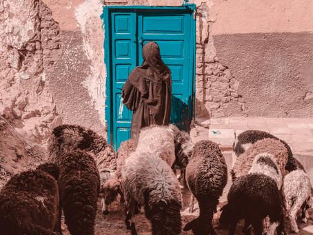 Beware of Wolves in Shepherd's Clothing