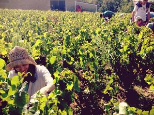 フランス収穫紀行2014 【6日目】