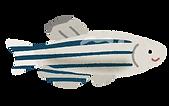 fish_zebrafish.png