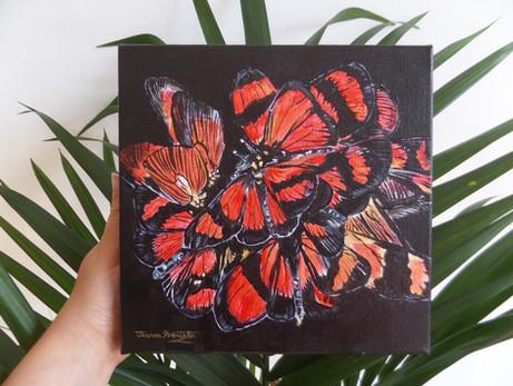 Actinote Butterflies