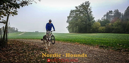 copyright nordic hounds