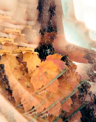 autumn flux