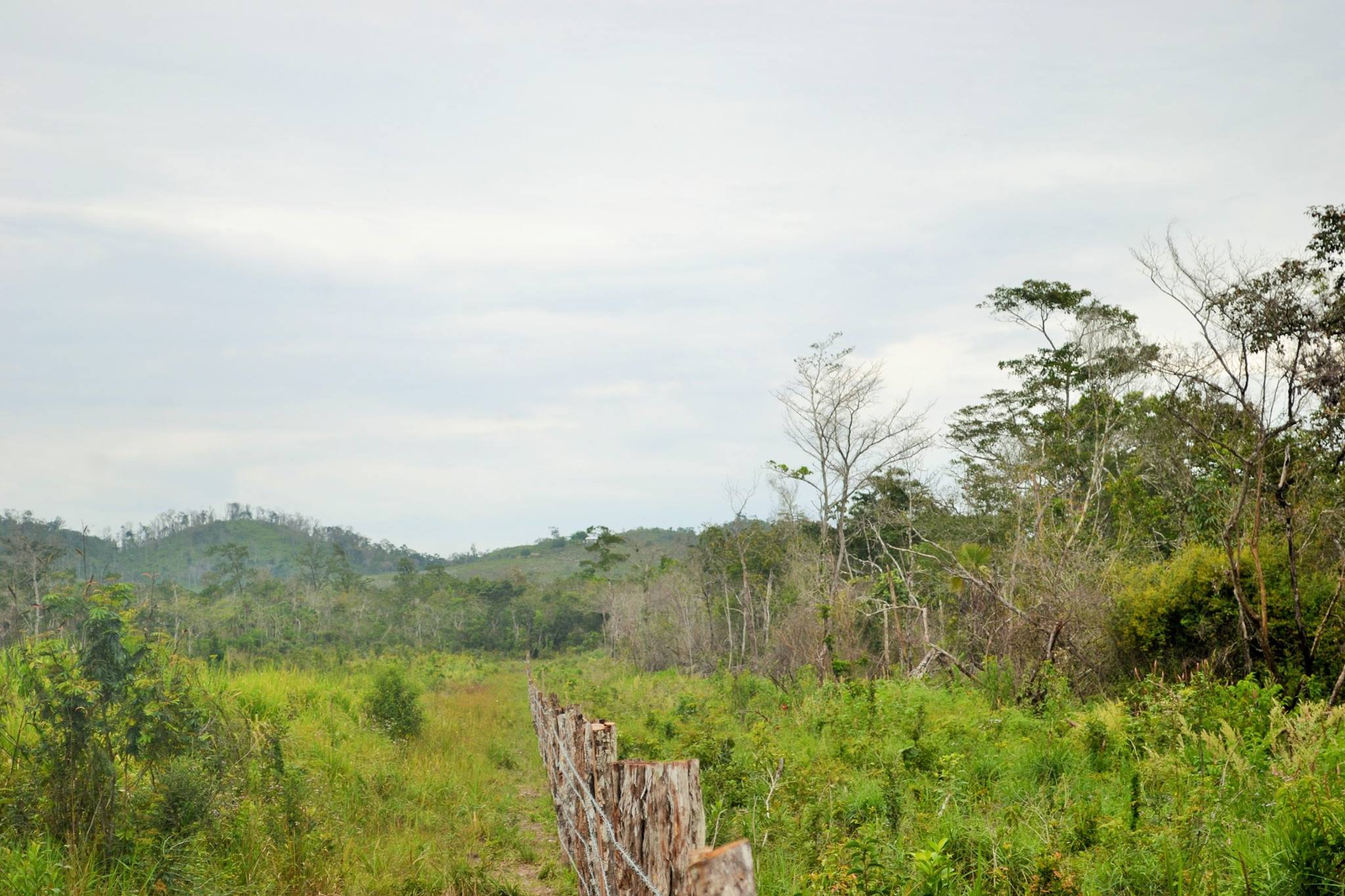 100 ACRES in the Spanish Lookout