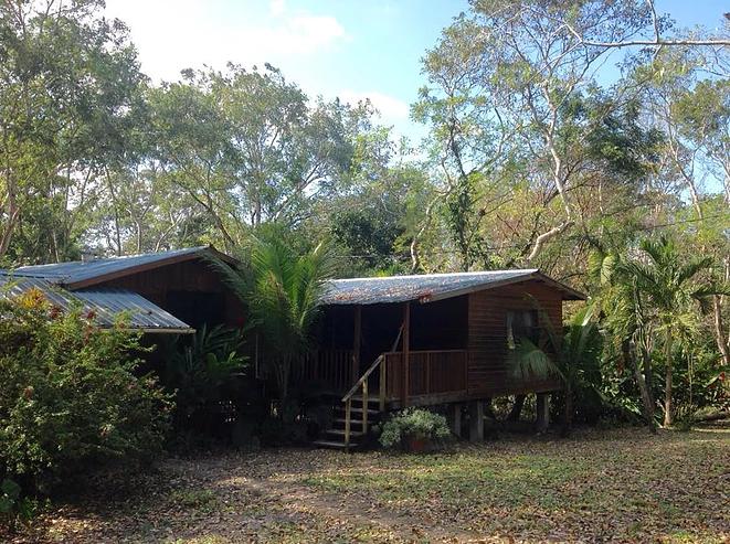 Jungle Bullet Tree Falls Home