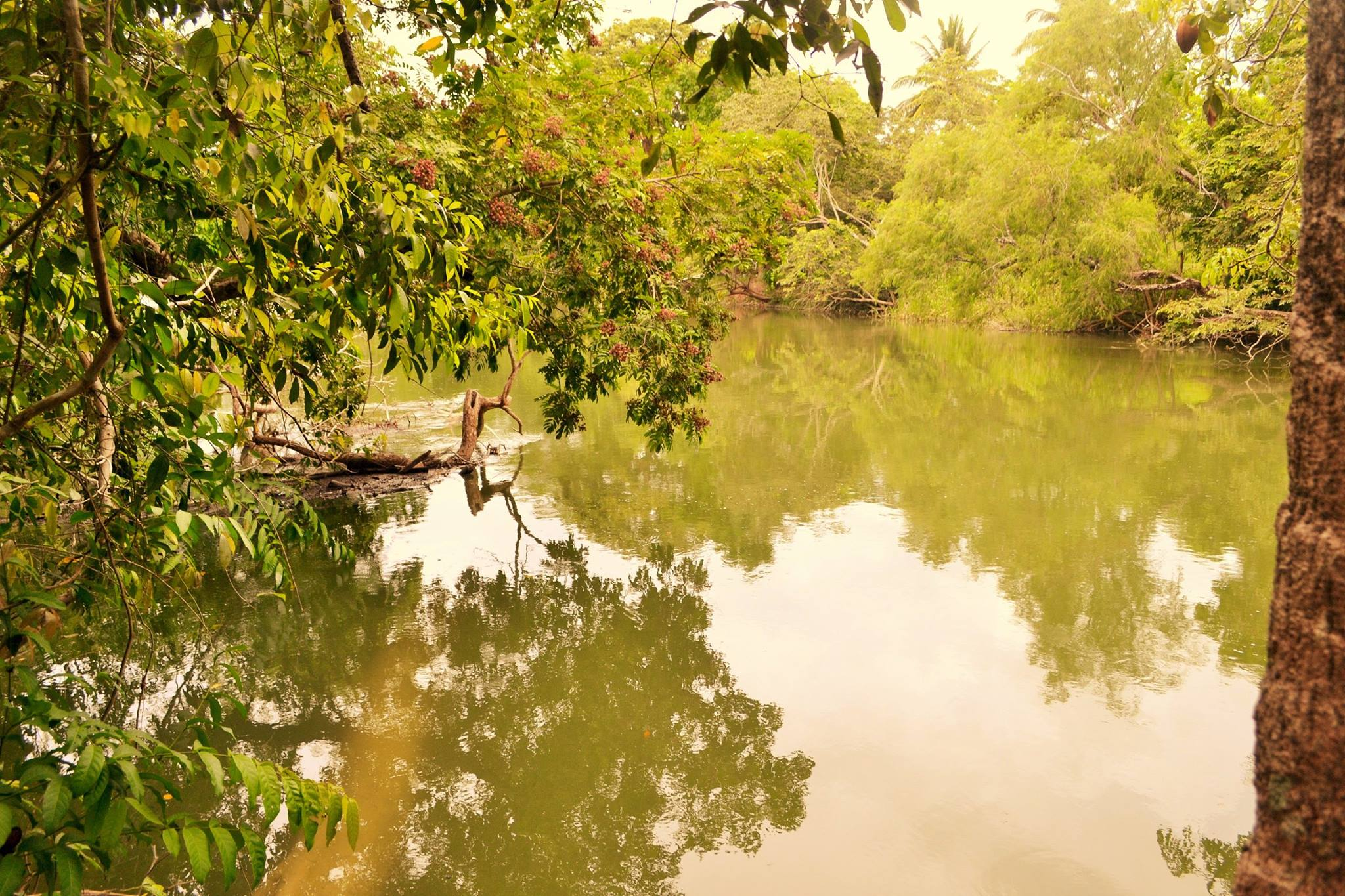 6.5 acres River front in Paslow Fall