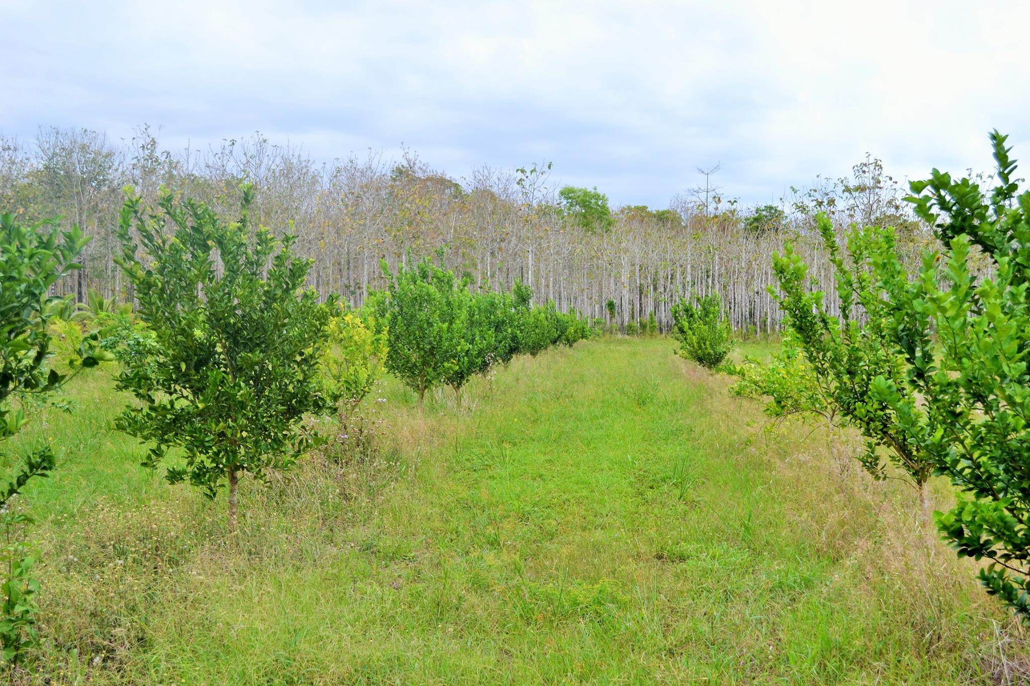 100 ACRES in Spanish Lookout